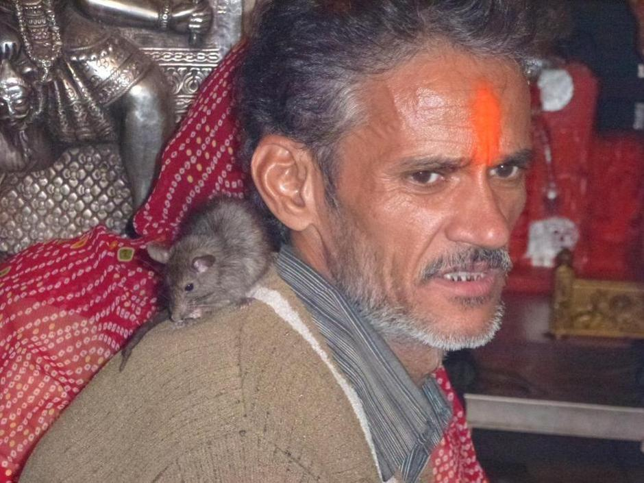karni mata temple of mice