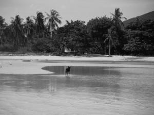 ko tao beach Aow Leuk