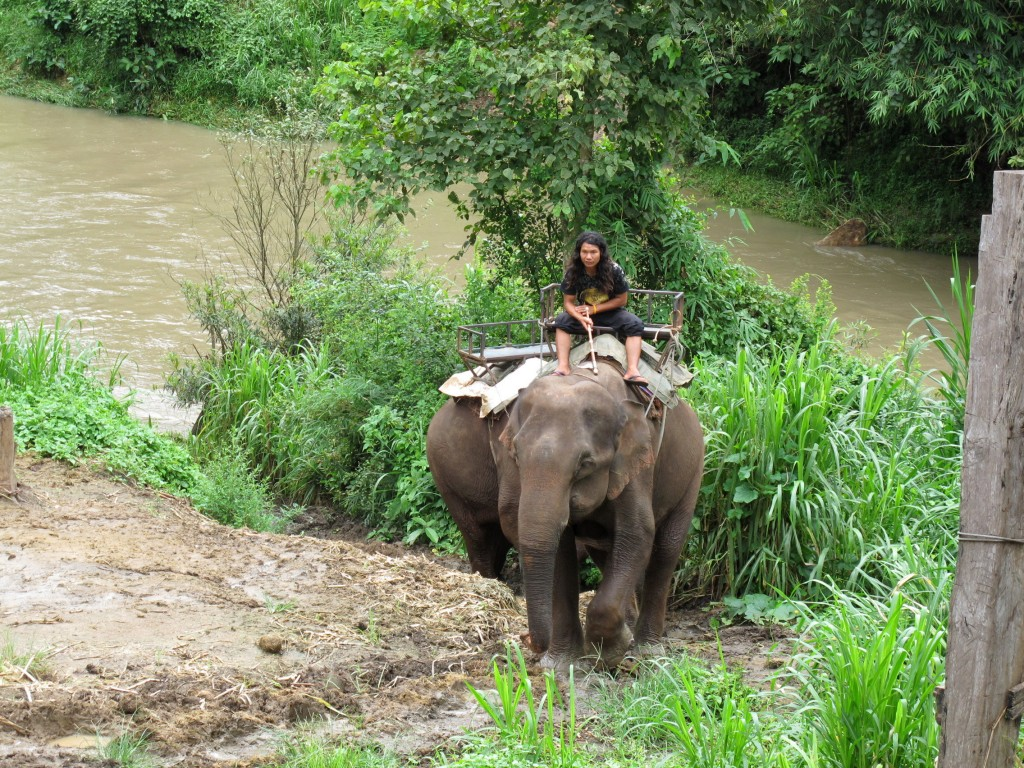 Elephant back ride adventure trip