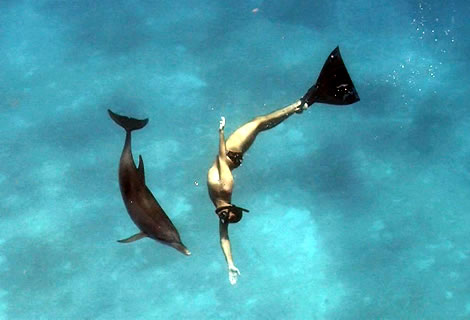 swimm with dolphins