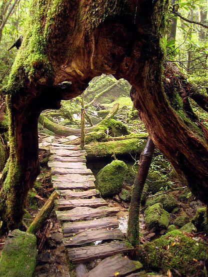 Yakushima enchanted forest Japan