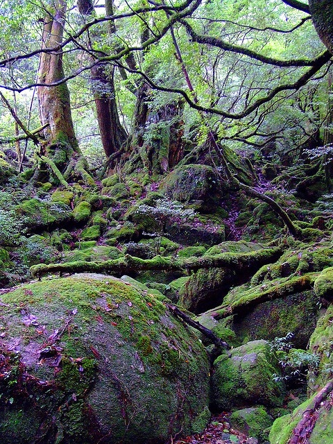 YAKUSHIMA ENCHANTED FOREST, JAPAN